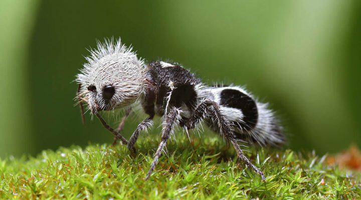 دنیای مورچه ها