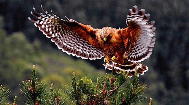 پرندگان زیبا (۲)
