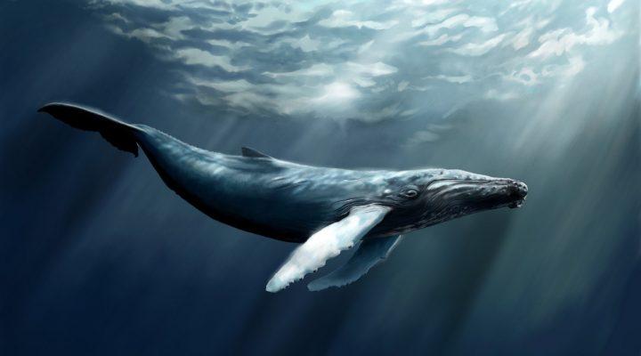 گالری عکس نهنگ