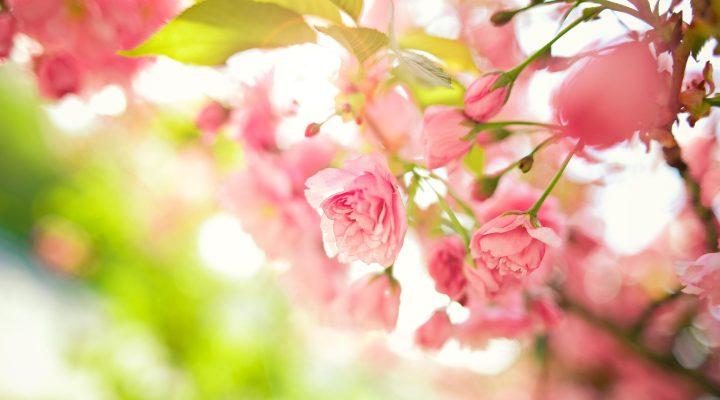 گالری عکس گل ها