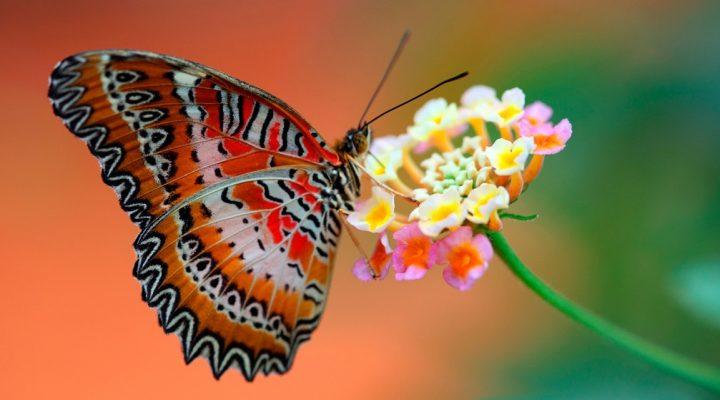گالری عکس پروانه