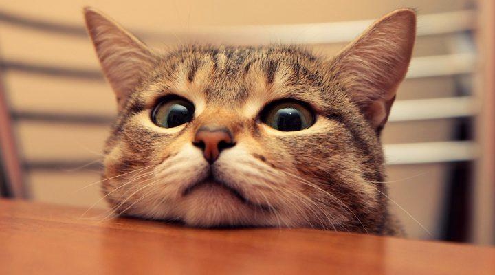 گالری عکس گربه