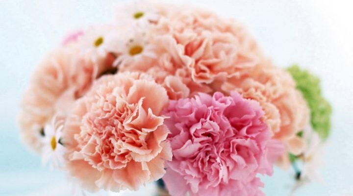 گالری عکس گل میخک