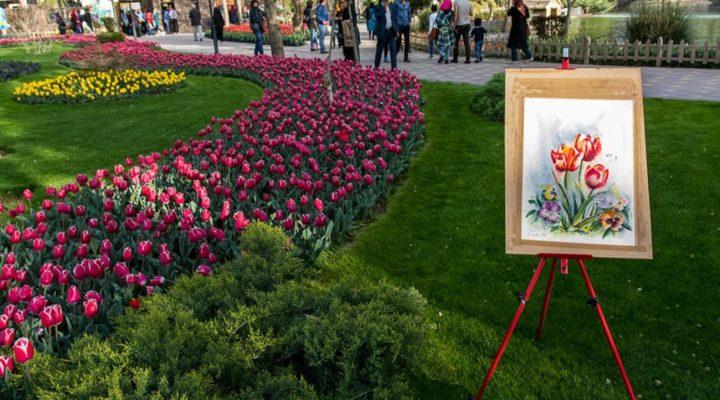 گالری عکس جشنواره لاله در استان البرز