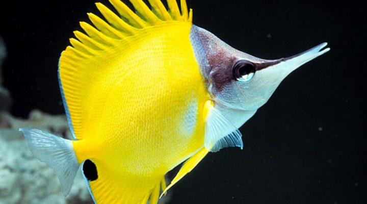 گالری عکس پروانه ماهی