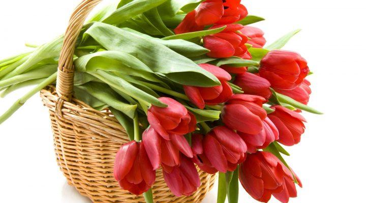 گالری عکس گل لاله