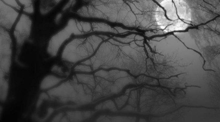 گالری عکس ماه و درخت