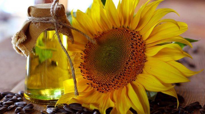 گالری عکس گل آفتاب گردان