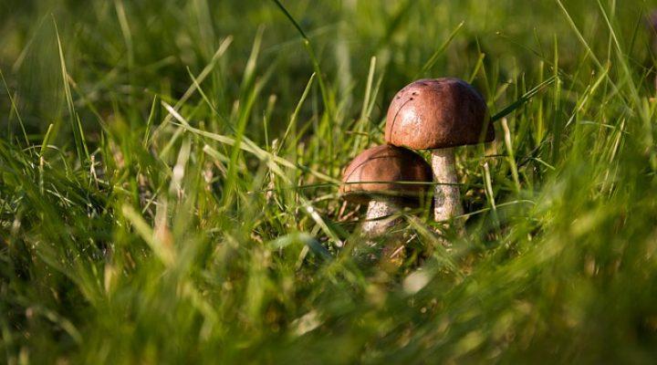 گالری عکس قارچ جنگلی