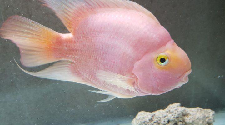 گالری عکس ماهی پرت
