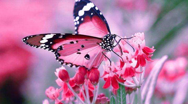 گالری عکس پس زمینه پروانه