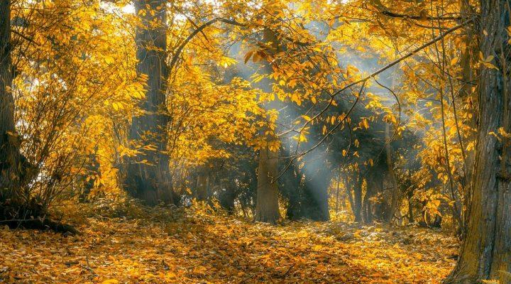 گالری عکس پاییز در جنگل