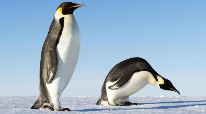 گالری عکس پنگوئن