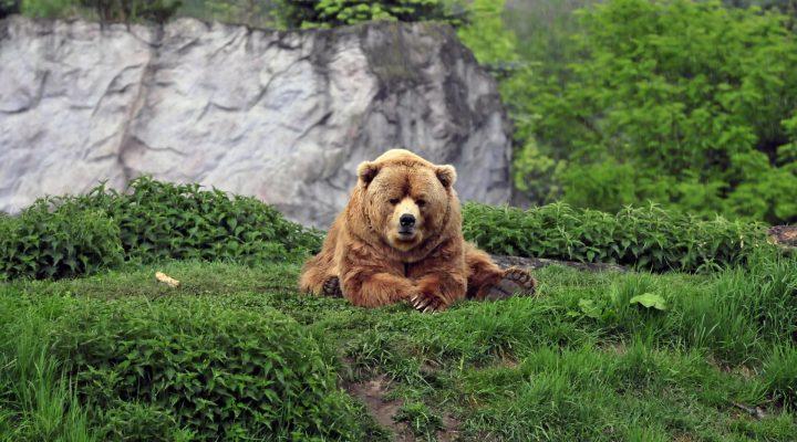 گالری عکس والپیپر خرس