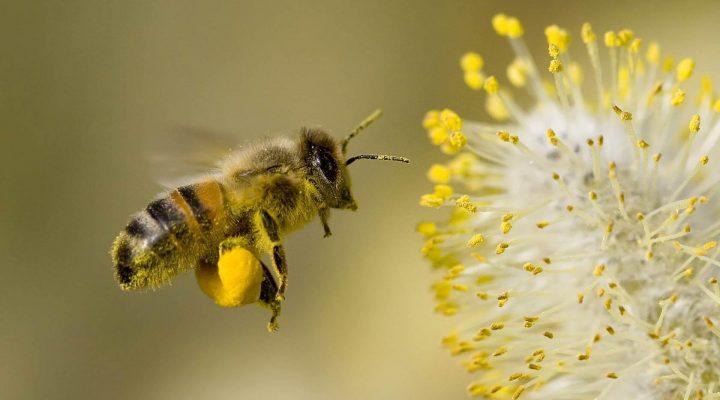 گالری عکس والپیپر زنبور