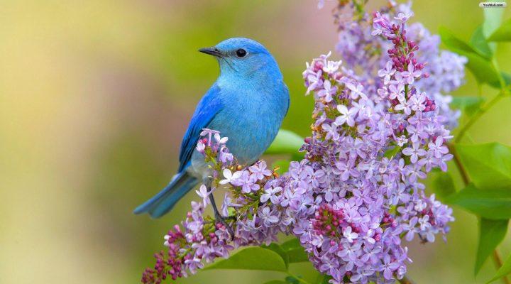 گالری عکس پرندگان