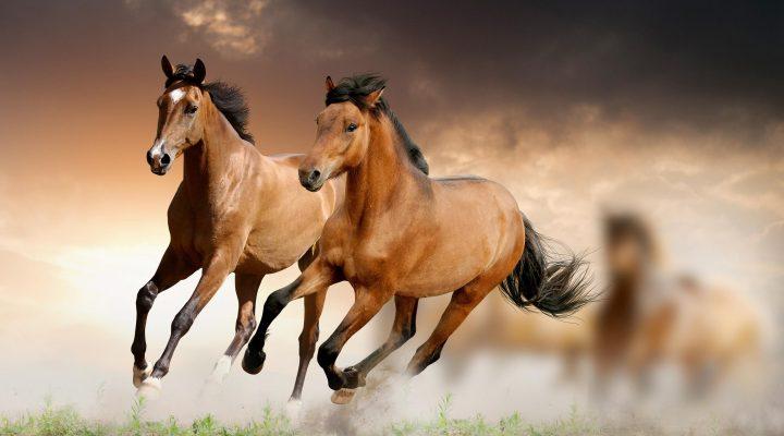 گالری عکس اسب قهوه ای