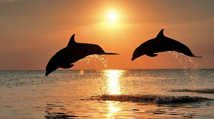 گالری عکس دلفین