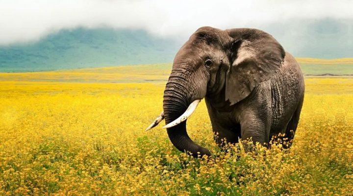 گالری عکس فیل