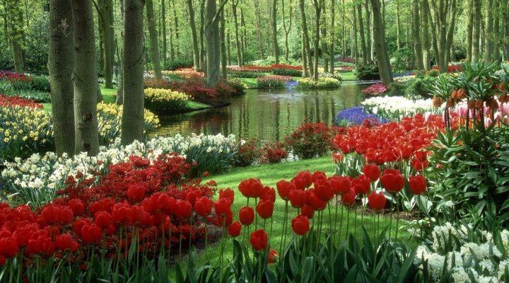 گالری عکس باغ گل ۲