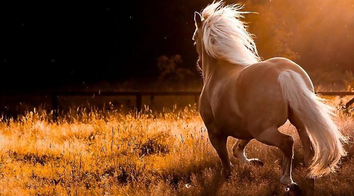 گالری عکس اسب