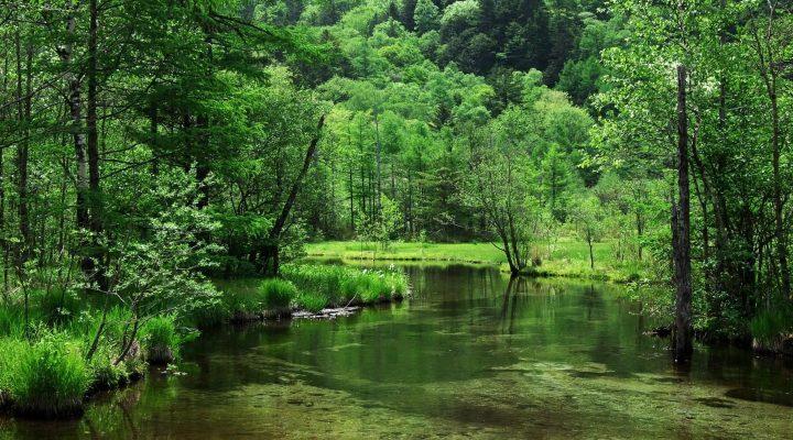 گالری عکس جنگل