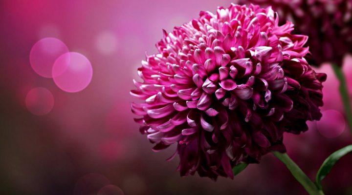 گالری عکس گلهای بنفش