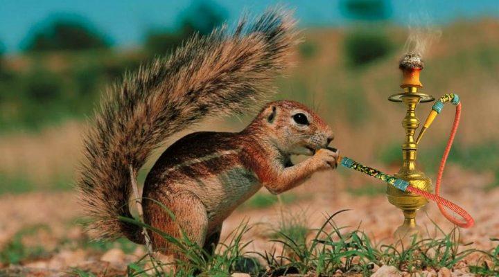 گالری عکس سنجاب