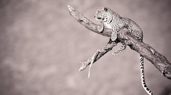 گالری عکس والپیپر حیات وحش