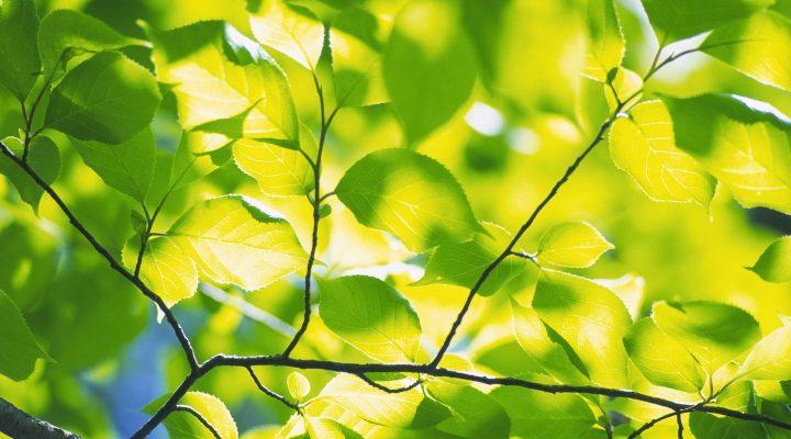 گالری عکس درختان سبز