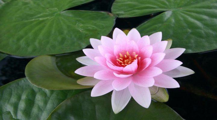 گالری عکس گلهای زیبا