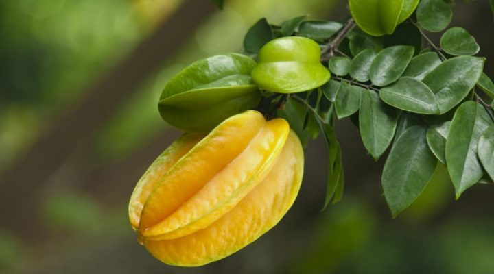 گالری عکس درخت میوه ستاره