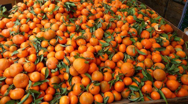 گالری عکس نارنگی