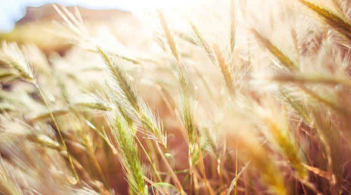 گالری عکس تشعش نور آفتاب در طبیعت