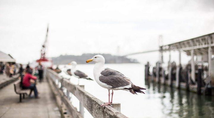 گالری عکس پرندگان (۲)