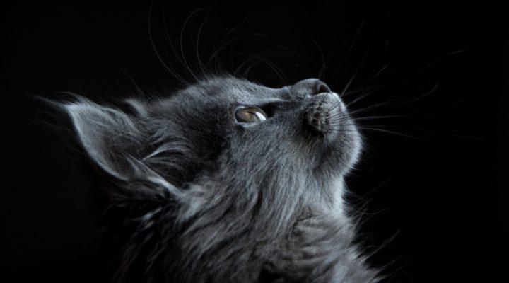 گالری عکس گربه های ناناز