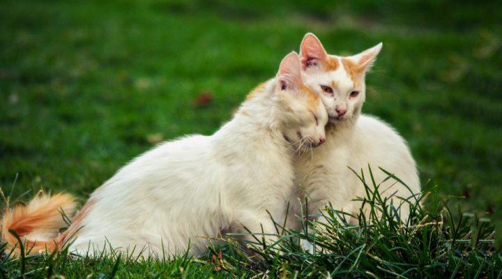 گالری عکس گربه های ملوس