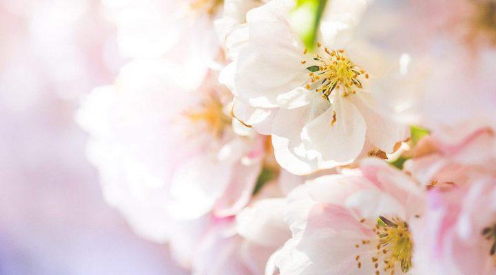 گالری عکس گلهای رنگارنگ