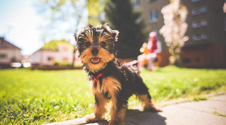 گالری عکس سگ بامزه