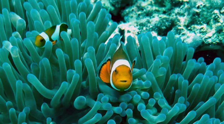 گالری عکس انواع ماهی
