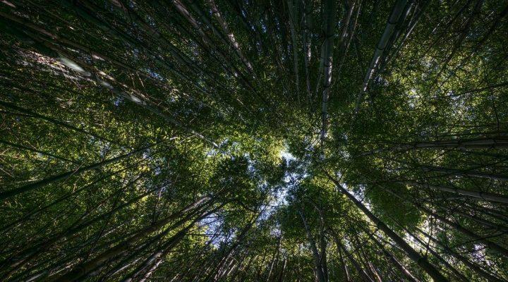 گالری عکس جنگل سبز