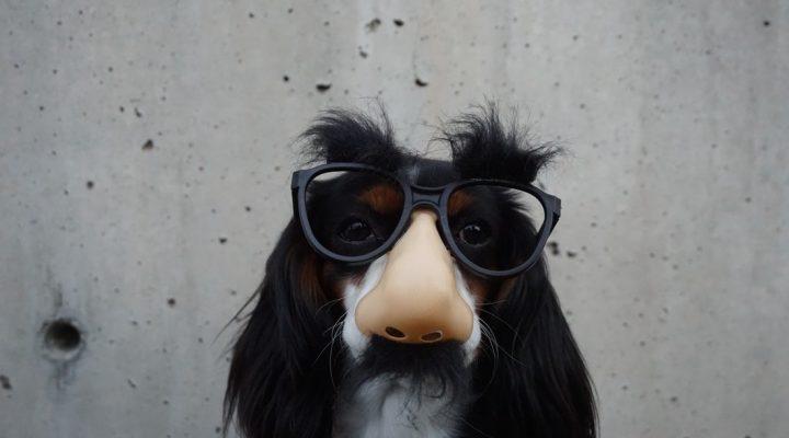 گالری عکس های بامزه حیوانات