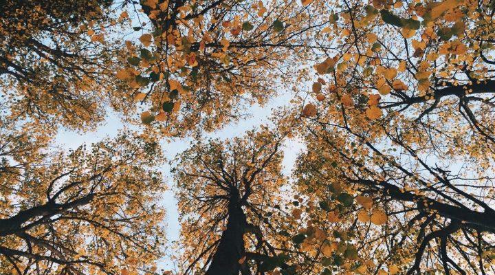 پادشاه فصل ها، پاییز