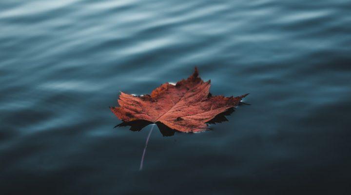 گالری عکس برگ های پاییزی
