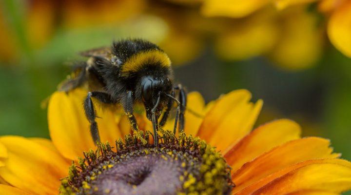 گالری عکس زنبور عسل