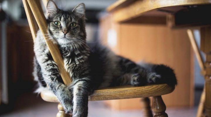 گالری عکس گربه ملوس