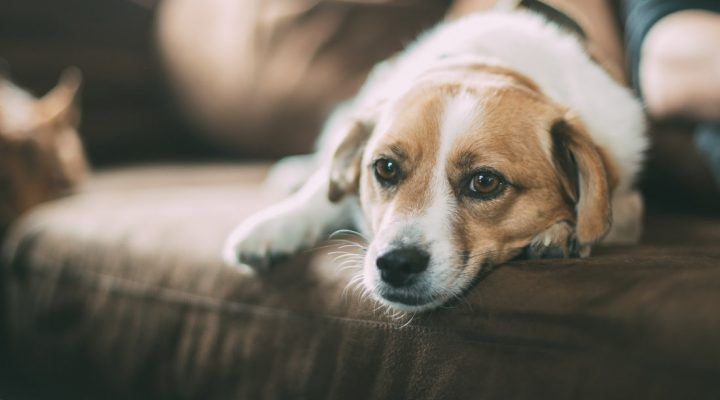 گالری عکس سگ (۳)