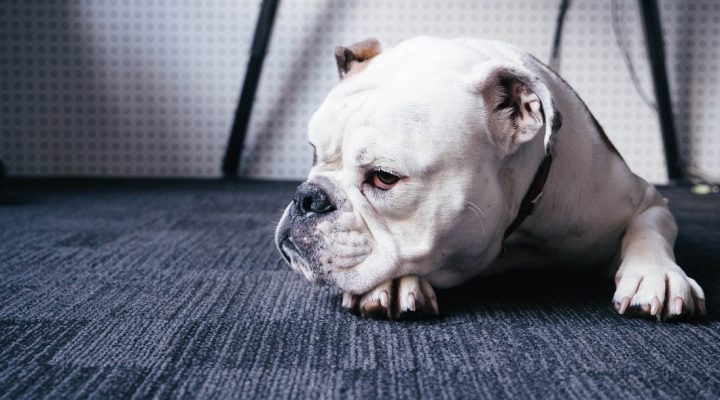 گالری عکس سگ (۴)