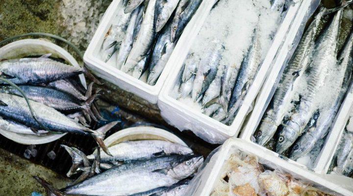 گالری عکس انواع ماهی (۳)