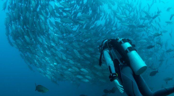 گالری عکس ماهی